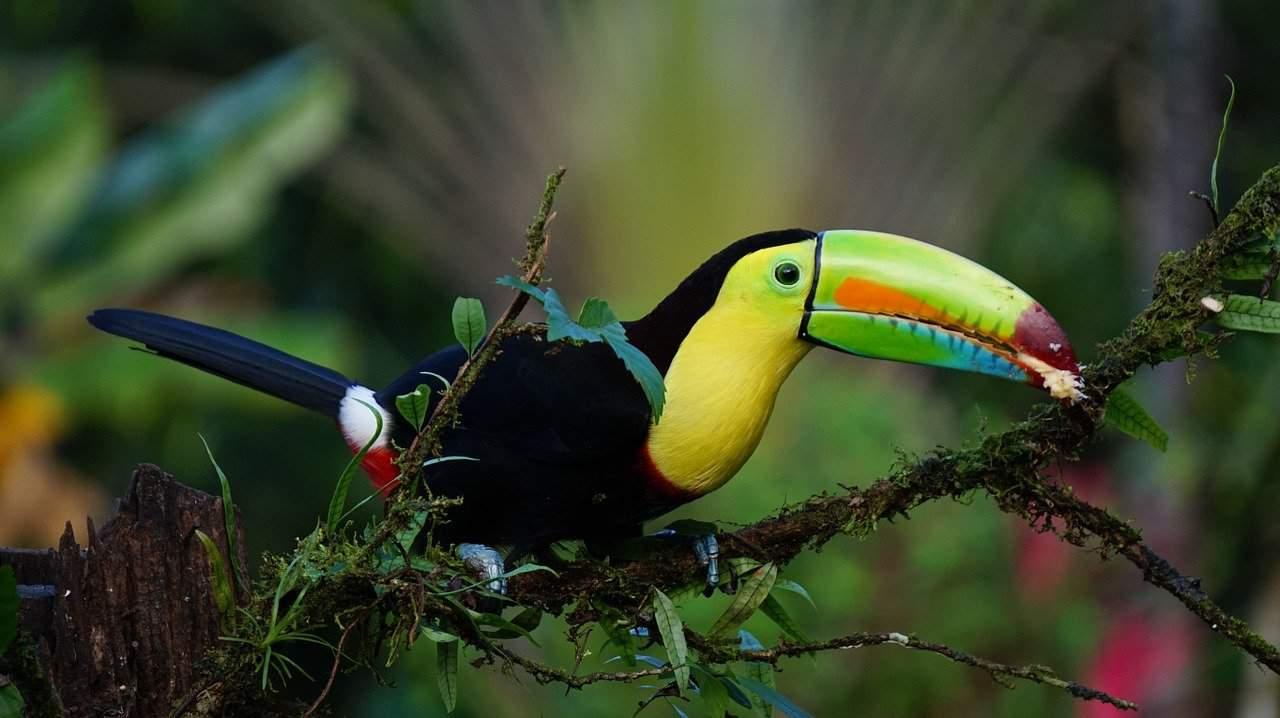 Birdlife in Costa Rica